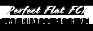 Perfect Flat